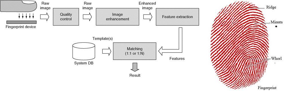 Biometric-Fingerprint-digital-lock-function